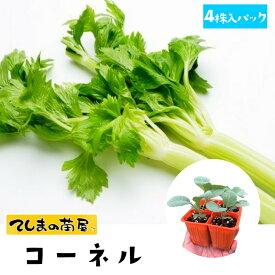 【てしまの苗】 セロリ苗 コーネル 4株入りパック 葉菜苗 培土 種 【人気】