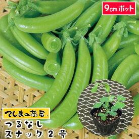 【てしまの苗】 つるなしスナック2号エンドウ苗 9cmポット 【野菜苗 培土 種 】 【ガーデニング】 【家庭菜園】