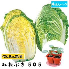 【てしまの苗】 ハクサイ苗 みねぶき505 4株入りパック 白菜 葉菜苗 培土 種 【人気】