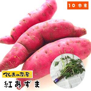 【てしまの苗】 さつまいも苗(イモヅル) 紅あずま1束10本入り サツマイモ