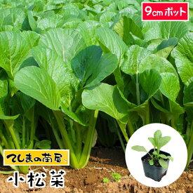 【てしまの苗】 コマツナ苗 小松菜 9cmポット 葉菜苗 培土 種 【人気】