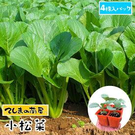 【てしまの苗】 コマツナ苗 小松菜 4株入りパック 葉菜苗 培土 種 【人気】
