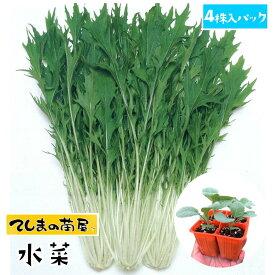 【てしまの苗】 ミズナ苗 水菜 4株入りパック 葉菜苗 培土 種 【人気】