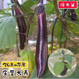 【てしまの苗】 ナス苗 庄屋大長 断根接木苗 9cmポット 野菜苗 培土 種