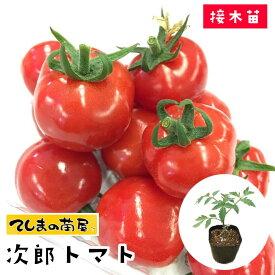 【てしまの苗】 ミニトマト苗 次郎トマト 断根接木苗 9cmポット 【人気】