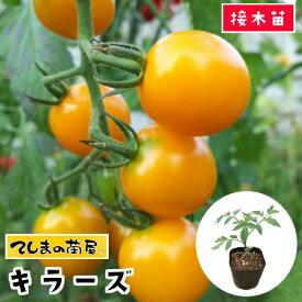 【てしまの苗】 トマト苗 キラーズ 断根接木苗 9cmポット05P01Mar15野菜苗 培土 種