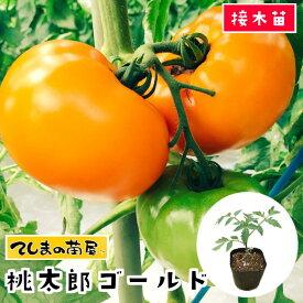 【てしまの苗】 トマト苗 桃太郎ゴールド 断根接木苗 9cmポット05P01Mar15野菜苗 培土 種