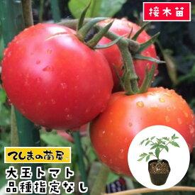 【てしまの苗】 大玉トマト苗 断根接木苗 9cmポット 品種は選べません