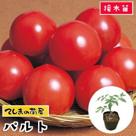 【てしまの苗】 大玉トマト苗 パルト 断根接木苗 9cmポット 野菜苗 培土 種