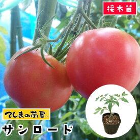 【てしまの苗】 大玉トマト苗 サンロード 断根接木苗 9cmポット 野菜苗 培土 種