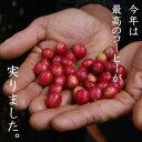 【送料無料】久々に新豆登場!これは飲んでほしい最高傑作 東ティモール レテフォホ 300g この柔らかさに癒される スペシャルティコーヒー ふぅ〜