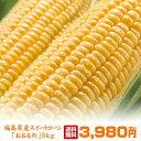 送料無料 福島県産トウモロコシ おおもの 10〜12本 約5kg スイートコーン