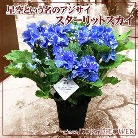 母の日 早割 贈答 まるで星空のように輝く アジサイ スターリットスカイ 青色 5号鉢 沖縄+1000円 鉢植え 来年 ギフトにも 紫陽花 贈答 贈答