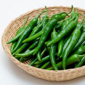 【青唐辛子1kg 青唐辛子 激辛 韓国調味料 調味料 韓国食品】