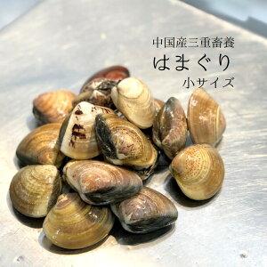 畜養はまぐり 小サイズ 1kg(1個30gサイズ)30-35個 ハマグリ 蛤【畜養ハマグリ1K(30g)】冷蔵 豊洲直送