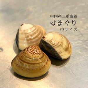 畜養はまぐり 中サイズ 1kg(1個60-70gサイズ)15個前後 ハマグリ 蛤【畜養ハマグリ1K(60/70g)】冷蔵 豊洲直送