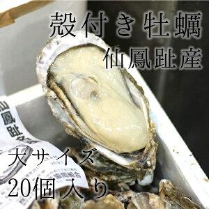 仙鳳趾産 殻付き牡蠣 生食用 大サイズ20個(約190g/個)豊洲直送 北海道産 カキ かき【仙鳳趾牡蠣190gx20個】 冷蔵