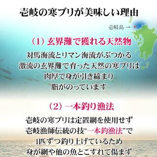 壱岐産天然寒ブリがおいしい理由玄界灘の荒波にもまれておいしくなる鰤