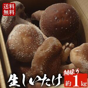 <期間限定>朝採り生しいたけ(約1kg) 肉厚!ジューシー!国産、京都の椎茸 送料無料【あっぷるふぁーむ】
