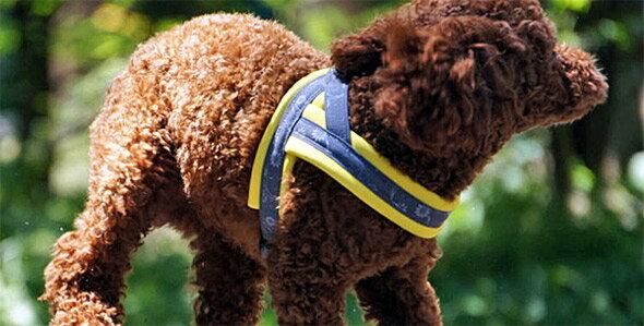 <入荷しました>フィンランドのドッググッズブランド【FinNero】T型スポーツクッションハーネス ハーネス 犬用 大型犬 中型犬 小型犬 胴輪 【今なら送料無料! ☆】 T型 クッションハーネス 北欧 フィンランド 犬用ハーネス
