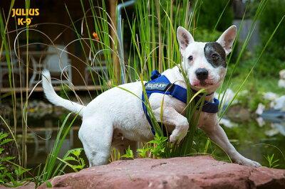 ハーネス小型犬中型犬犬犬用胴輪【IDC@Color&GrayBeltハーネス】IDCカラーアンドグレイベルトハーネスMiniMini・Mini胸囲40〜67cm全3色【Julius-K9】ユリウスケーナイン犬用ハーネスお揃いのリードあります♪(別売)