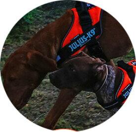 2016-2017カラー ハーネス 犬 中型犬 大型犬 犬用 胴輪 IDCパワーハーネス Size0-1-2 胸囲58〜96cm Julius-K9 ユリウスケーナイン 犬用ハーネス [送料無料][お取り寄せ可能]