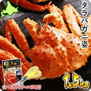 【冬 ギフト】カニ タラバガニ 姿 ボイル 1.5kg /かに ボイル カニ 姿 蟹 蟹姿 たらばがに 一匹 たらば蟹 特大 タラバ蟹 1.5キロ すがた 送料無料 グルメギフト 御歳暮 カニ 蟹 プレゼント 食べ物