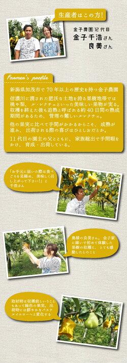 【頑張って送料無料!】金子さん夫妻が作る果物の中の貴婦人!ル・レクチェ2kg(5〜7玉)〜トロッとしてなめらかな舌触り!〜※生鮮果実のため商品代引き利用不可【楽ギフ_のし】【楽ギフ_のし宛書】