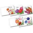 楽天市場 横型イラスト種子夏の花 朝顔 国産 500個セット販売 夏を感じるパッケージの花の種 景品 ゴールドスター