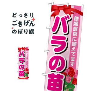 バラの苗 のぼり旗 GNB-1078 花各種