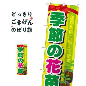 季節の花苗 のぼり旗 GNB-1080 苗木・植木
