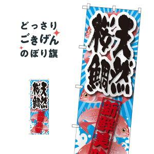 天然桜鯛 のぼり旗 SNB-2359 魚介名