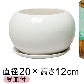 ツルツル 陶器鉢 HG ポッコリ 丸型 白 つや有 7号 20cm 2.3リットル 受皿付 植木鉢 おしゃれ