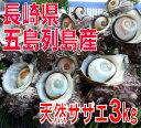 長崎県五島列島産!天然活サザエ3kg(18〜23個)