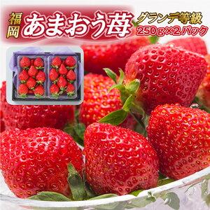 【送料無料】福岡県 あまおう苺 グランデ等級(G) 秀品 (250g×2パック) イチゴ いちご 果物 フルーツ 贈り物 プレンゼント 贈答 ギフト 自宅用 箱