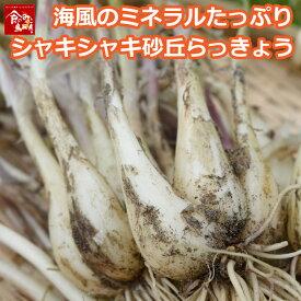 鳥取県産 砂丘らっきょう 3kg 生らっきょう 土 根 茎 付き 数量限定 大きさ不揃い アチーブエモーション 産地直送 らくだ 種 苗 他のメーカー商品との同梱不可 代引不可 日付指定不可