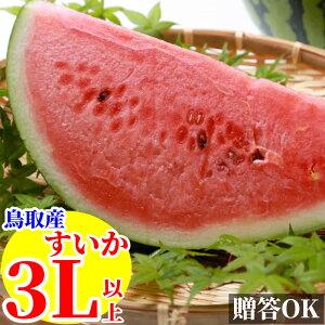 スイカ 鳥取県産 1玉 3Lサイズ以上【送料無料】すいか 西瓜 ギフト 山田農園