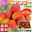 《送料無料》沖縄産 ミニマンゴー 約1.5kg 多少の訳あり品 【同梱不可】☆