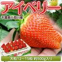 いちご 千葉県産 「アイベリー」 12〜15粒 約500g ※冷蔵【同梱不可】○