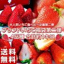 いちごイチゴ苺ブランドいちご福袋第二弾4品種合計約1キロ