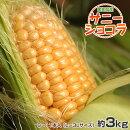 《送料無料》愛知県産トウモロコシ『サニーショコラ』8〜11本入(約3kg)※冷蔵【同梱不可】☆
