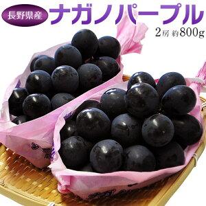 ぶどう 葡萄 送料無料 長野県産 ナガノパープル 2房(合計 約800g)常温又は冷蔵