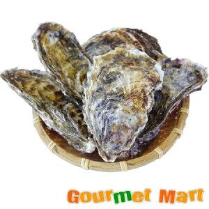 マルえもん[2Lサイズ]30個セット 北海道産 牡蠣 カキ 殻付き 生食 母の日 ギフト 送料無料