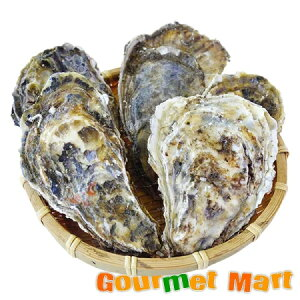 カキえもん[2Lサイズ]20個セット 北海道産 牡蠣 カキ 殻付き 生食 敬老の日 ギフト 送料無料