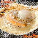 送料無料 ホタテ ほたて 特大 片貝ほたて 40枚 10枚×4袋 10〜11cmの特大サイズ!北海道産のほたて貝【殻付きほたて …