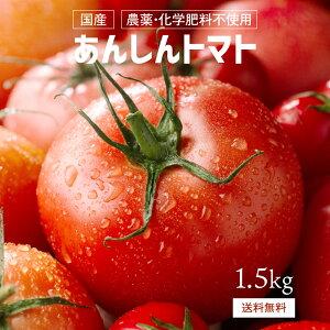 【送料無料】あんしんトマト 1.5kg(兵庫県産、農薬・化学肥料不使用)産地直送 栄養 美容 美肌 健康 安心 安全
