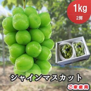シャインマスカット 1kg(2房) 家庭用 岡山県産