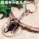 【数量限定】《インパクト満点》昆虫キーホルダー[ニューギニアフォレストサソリ]・キーリング・キーチャーム・レジ…