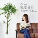 人工観葉植物 光触媒 イボタノキ150cm 水やり不要 高さ150 インテリアグリーン 観葉植物 造花 イボタノキ150cm
