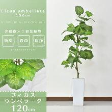 人工観葉植物光触媒フィカス・ウンベラータ水やり不要高さ120インテリアグリーン観葉植物造花【フィカス・ウンベラータ】